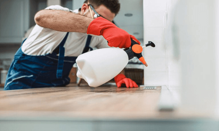 How To Remove Bed Bugs From Wood Furniture: Where Bed Bugs Are Found