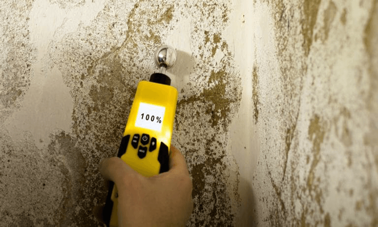 The 7 Best Moisture Meters For Logs